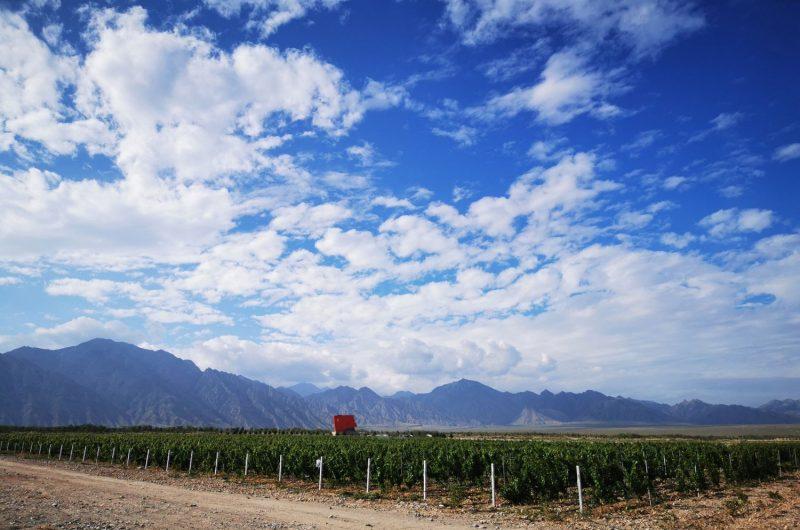 Ningxia Hejinzun Winery, Helanhong Cabernet Sauvignon, Helan Mountain East, Ningxia, China